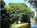 SJ4735 : Tree on the towpath, west of Whixall Moss by Christine Johnstone
