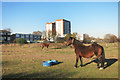 TQ1377 : Houses & Horses, Osterley Park by Des Blenkinsopp