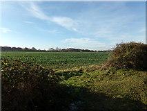 TG0822 : Farmland off Kerdiston Road by Geographer
