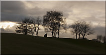 SD8203 : A monolith and trees by Ian Greig