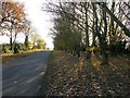 SE9023 : Tree-lined road south of Whitton by Graham Hogg