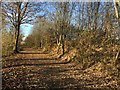 SJ8446 : Newcastle-under-Lyme: path and cycleway by Jonathan Hutchins
