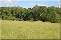 TQ5145 : Meadow on River Eden Floodplain by N Chadwick