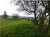 H5371 : Hedge line, Bancran by Kenneth  Allen