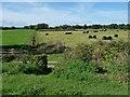SJ4935 : Drained farmland, south of Whixall Moss by Christine Johnstone