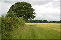 TQ5247 : Footpath along field boundary by N Chadwick