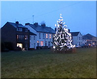 ST3390 : Christmas tree on Goldcroft Common, Caerleon by Jaggery