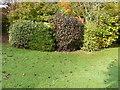 TR2043 : Autumn tints in the garden of Winterdown Cottage by John Baker