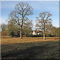 TL4346 : Fine trees on Thriplow Meadows by John Sutton