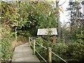 SX0046 : Lost Gardens of Heligan: boardwalk in The Jungle by Jonathan Hutchins
