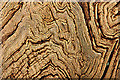 TQ5452 : Chestnut tree by Richard Croft