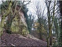 TA0225 : Humber Bridge Country Park, Hessle, Yorkshire by Bernard Sharp