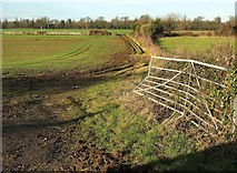 ST7981 : Field west of Badminton by Derek Harper