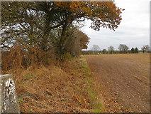 SJ6925 : Field edge view from Hinstock Triangulation Pillar by Peter Wood