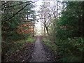 NY3834 : Forest path at Millfield Lodge by David Brown