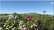 SH4793 : Flowers & view towards Point Lynas Lighthouse, Anglesey by Colin Park