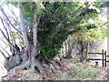 ST9964 : Tree and stile by Michael Dibb