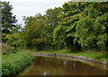SJ5446 : Llangollen Canal south of Norbury Common in Cheshire by Roger  Kidd