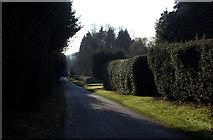 SP9435 : Woburn Lane looking South by Robert Eva