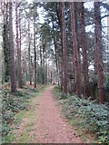 J3829 : Path through Donard Wood by Eric Jones