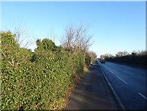 TQ4988 : London Road (A118) by Marathon