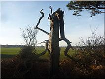 NT6378 : East Lothian Landscape : Dance Macabre by Richard West