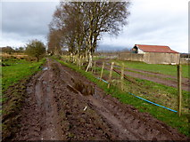 H5172 : Muddy lane, Cloghfin by Kenneth  Allen