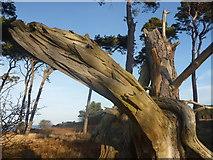 NT6378 : East Lothian Landscape : Sniffing The Breeze by Richard West