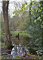 SP3576 : One of the ponds in Whitley Grove, southeast Coventry by Robin Stott
