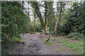 SP3576 : Paths in Whitley Grove, southeast Coventry by Robin Stott