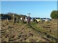 NU2326 : Northumberland Coast Path at Newton Link by Alan Murray-Rust