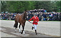 ST8082 : Badminton Horse Trials, Gloucestershire 2015 by Ray Bird