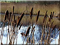 H3576 : Bulrushes, Claraghmore by Kenneth  Allen