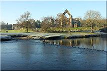 SE0754 : Wharfe at Bolton Abbey by Derek Harper