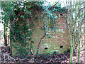 TM3195 : Ivy-clad building in the woods by Evelyn Simak