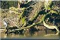 ST1879 : Heron and cormorant, Roath Park Lake, Cardiff by Robin Drayton
