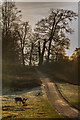 TQ5354 : Knole Park by Ian Capper