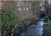 TQ0371 : River Colne by Robert Eva