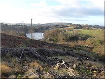 NS5379 : Felled woodland above Carbeth Loch by Alpin Stewart