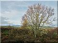 NH6750 : On the ridge of Taindore Wood by Julian Paren