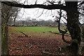 SO1900 : Pasture, Manmoel Road by M J Roscoe