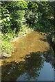 SX1066 : Cardinham Water by Derek Harper