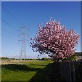 NT3974 : Power line, Prestonpans by Richard Webb