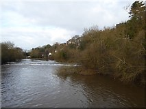 SX9192 : Head Weir on River Exe by David Smith
