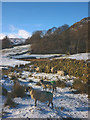 NY4504 : Sheep in the snow, Kentmere by Karl and Ali
