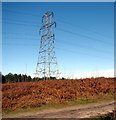 TG4600 : Electricity pylon in Fritton Wood by Evelyn Simak