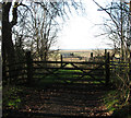 TG4500 : Gates into Fritton Marshes by Evelyn Simak