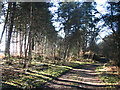 TG4500 : A path in Fritton Wood by Evelyn Simak