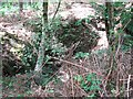 TG4600 : Bracken growing in trench by Evelyn Simak