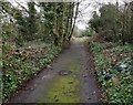 SK5802 : Path on the former St Mary's Allotments by Mat Fascione